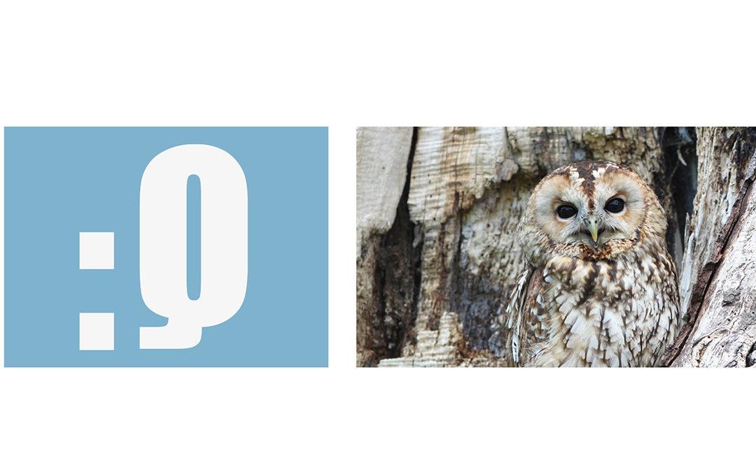 Newsletter qualitynews